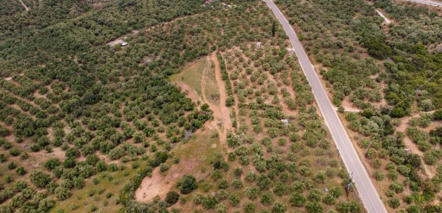 Οικόπεδο – Αγροτεμάχιο στους Γαργαλιάνους Μεσσηνίας