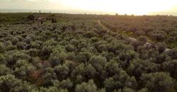 Οικόπεδο στη θέση Ρίκια, Μεσσηνία
